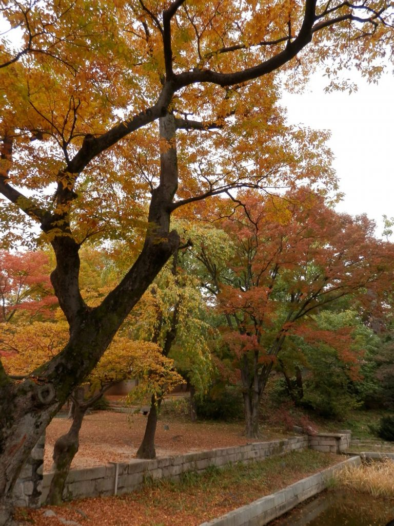 Beautiful Colours at the Secret of Changdeokgung Palace
