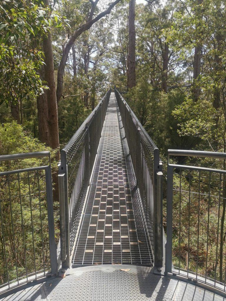 Tree Top Walk - 40 Meters above Ground