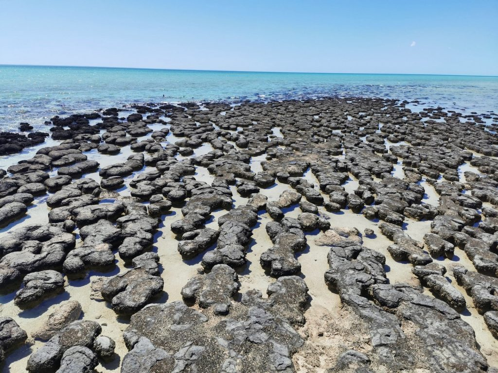 Stromatolites at Hamelin Pool