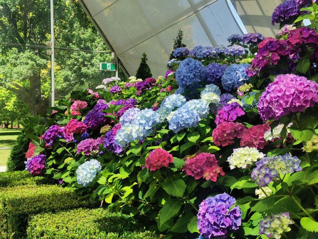 Botanical Garden Ballarat