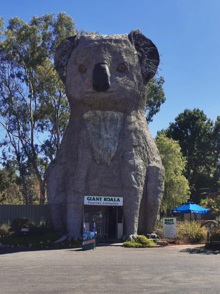 Giant Koala near Halls Gap (scary Stuff)